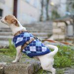 Aumentan las intoxicaciones por chocolate perros en Navidad