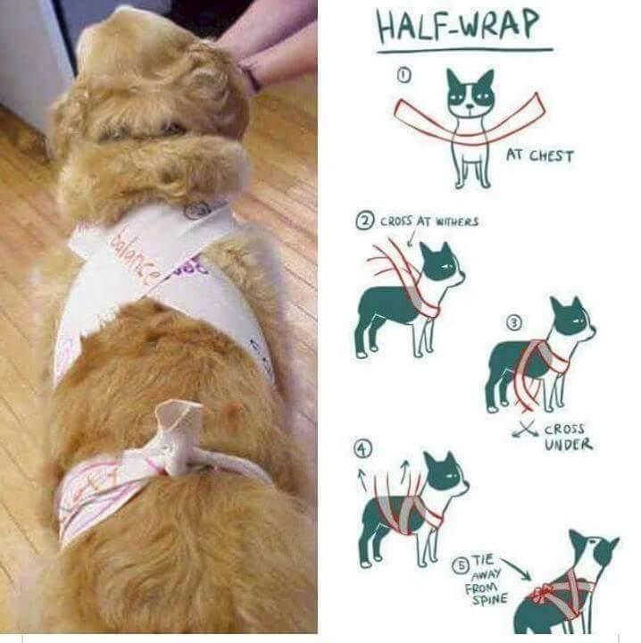"""El """"Método Wellington"""" para perros no es eficaz"""