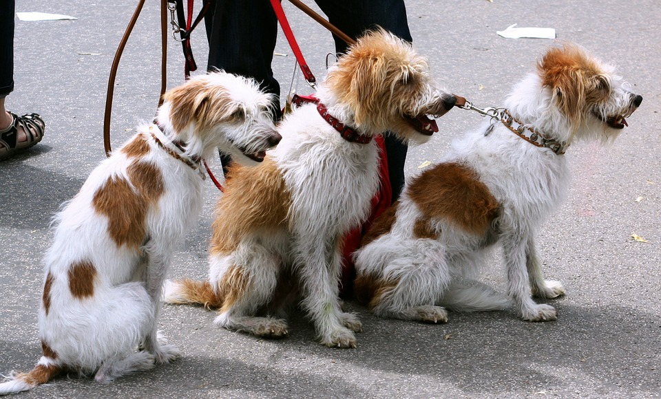 Málaga se suma a la recolecta del ADN de los perros - noticias de perros