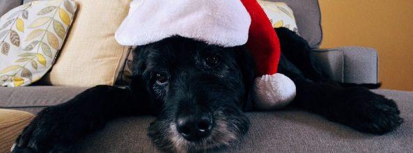 Guía de regalos de Navidad para perros ancianos