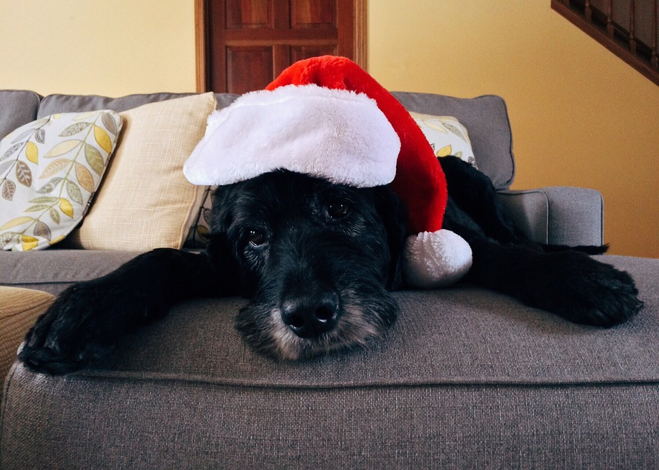 Guía Regalos de Navidad para perros ancianos
