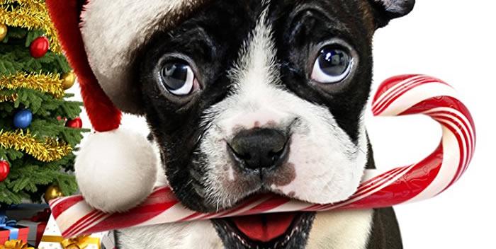 Alone for Christmas (2013) - Películas navideñas con perros