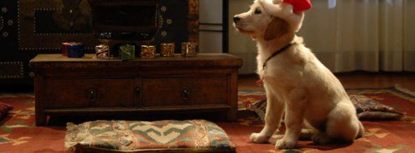 Películas de Navidad con perros