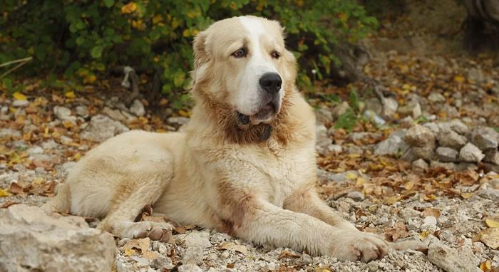 ¿Por qué huelen las patas de los perros?