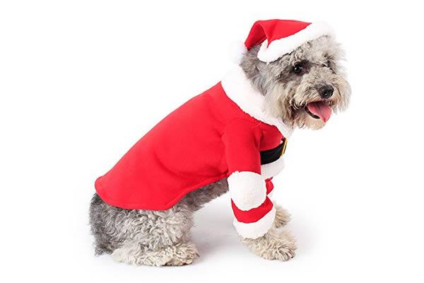 La mejor ropa para perros ancianos de Navidad