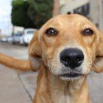 Críticas a Rusia por el exterminio de perros callejeros