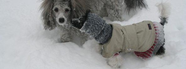 ¿Se puede pasear con el perro cuando hace frío?