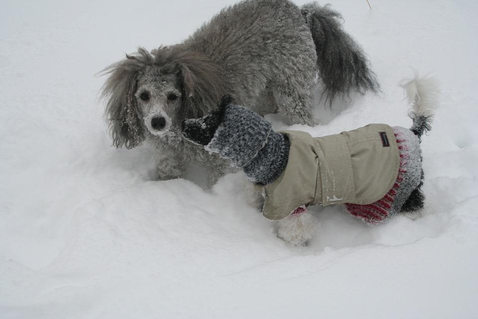 Se-puede-pasear-con-el-perro-cuando-hace-frio