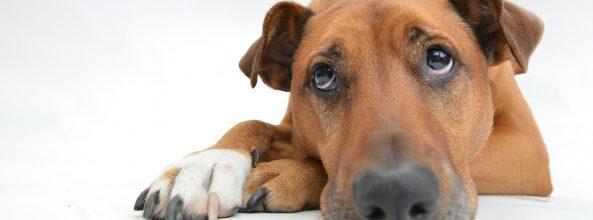 Te explicamos cómo ven los perros (últimos estudios)
