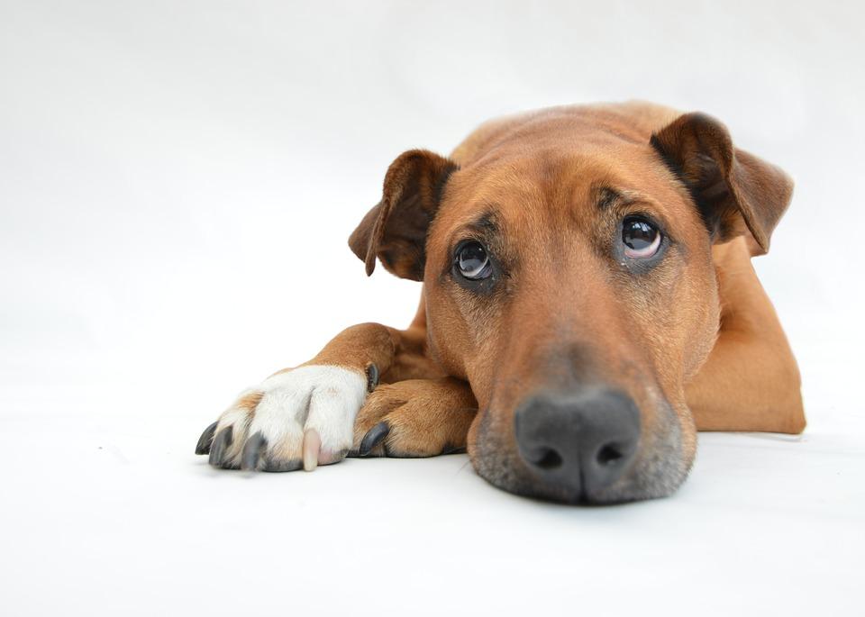 Te explicamos cómo ven los perros