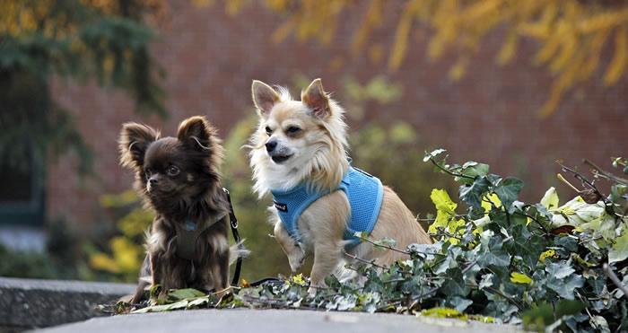 Social Animals, la app para perros ¡para encontrar pareja!