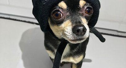 Petements la marca de ropa para perros que los famosos aman