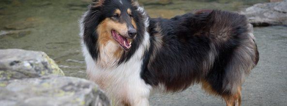 Moda de alta costura para perros