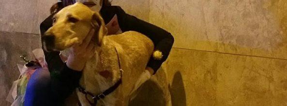 Los perros de Sant Boi abrirán la cabalgata de Reyes