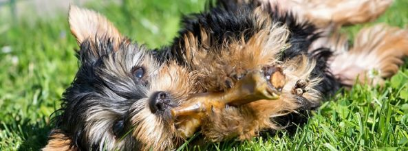 Alimentos peligrosos para la salud de nuestro perro