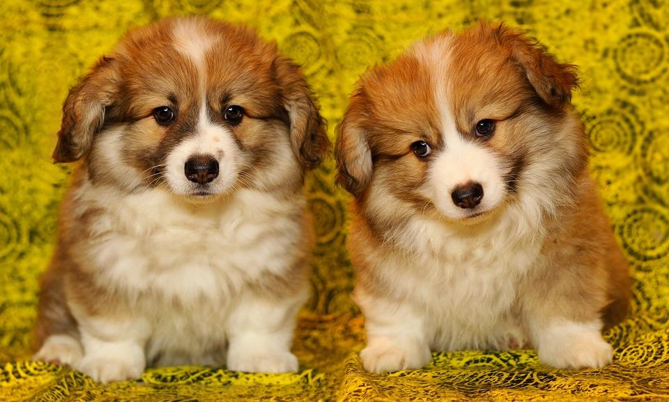 El análisis de ADN de los perros llega a Vigo