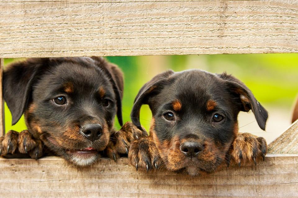 El peligro de la moda de no vacunar a los perros