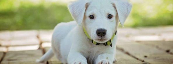 Encuentran una tumba milenaria de perros y humanos