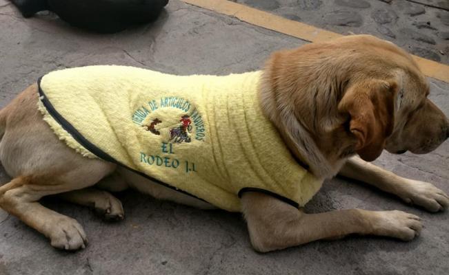 Hombre de Tlaxcala ayuda a 100 perros callejeros