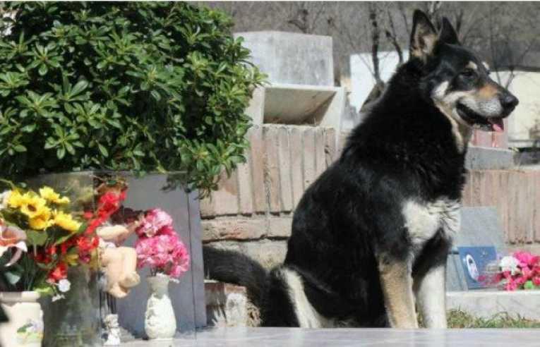 Muere perro que veló tumba de su dueño durante 10 años