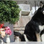 Muere el perro que veló la tumba de su dueño durante más de 10 años