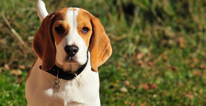 A tener en cuenta cuando quieres adoptar un perro de raza mediana