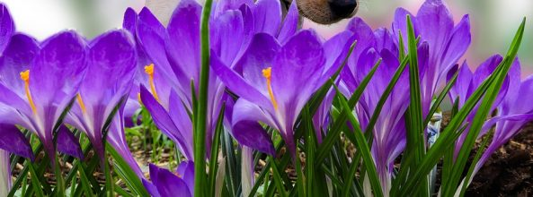 5 vídeos de perros amigos de otros animales que te encantarán