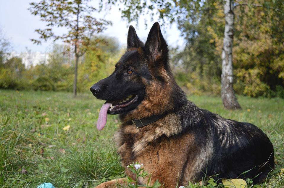 Descubre cómo tratan a los perros policía