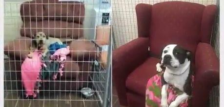 Donan sofás viejos a perros de refugios