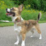 La cirugía estética para perros, una realidad en Estados Unidos
