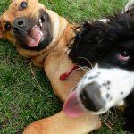 ¿Sabes cuáles son los vídeos virales de perros más famosos en la red?