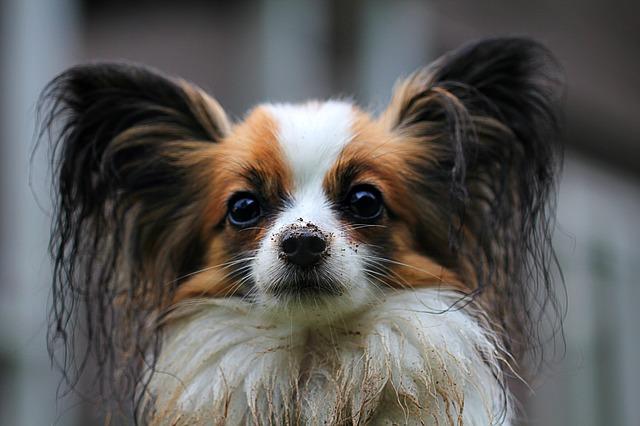 ¿Se podrá imponer un impuesto por tener perros pronto?