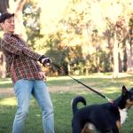Snau planifica una campaña de concienciación sobre el abandono de perros