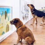 Nuevo museo para perros en Londres