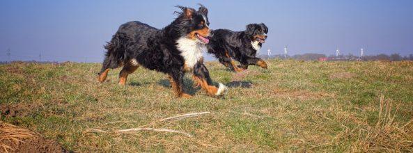 5 libros sobre perros que te encantará conocer
