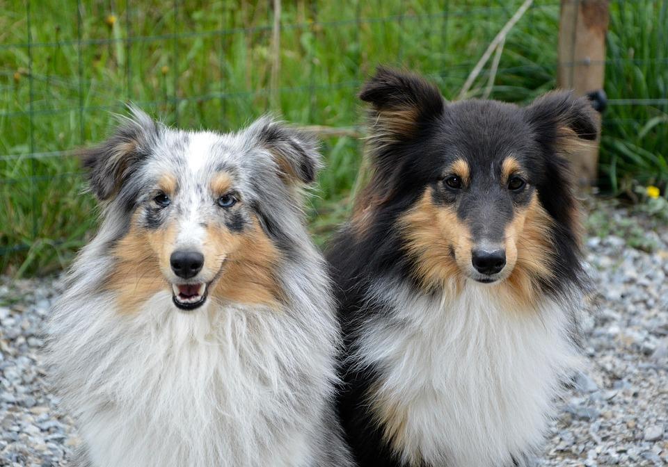 5 libros sobre perros imprescindibles