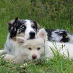Cómo evitar la indigestión en perros