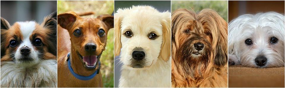 motivos por los que un perro puede mover la cola