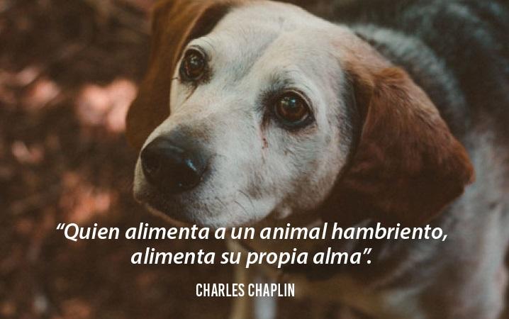 Frases sobre perros bonitas para poner en Facebook