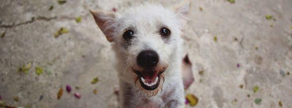 ¿Sabes que tener un perro mejora tu salud mental y física?