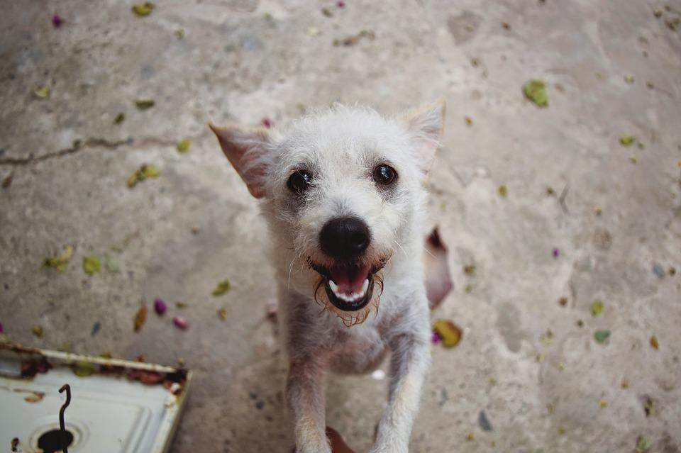 ¿Sabes que tener un perro mejora la autoestima?