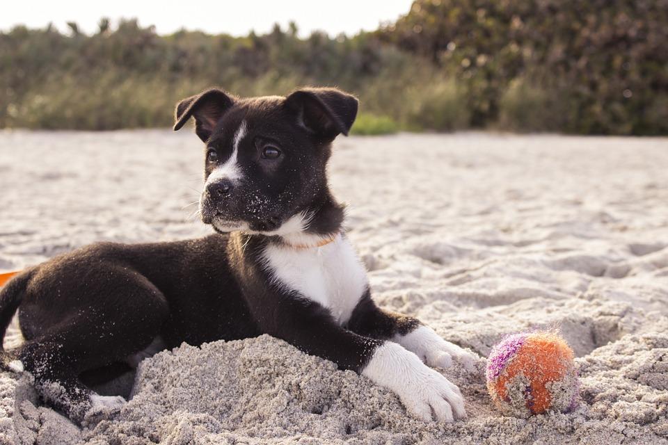 Se abandonan más perros en Galicia por la nueva ley