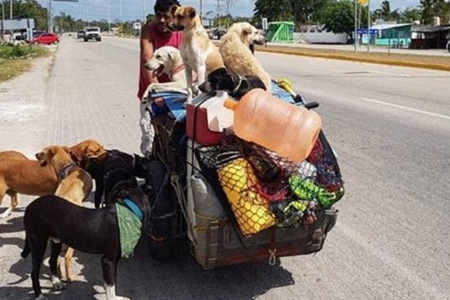 Un mexicano rescata a más de 400 perros de la calle
