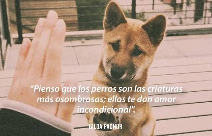 Citas bonitas y emotivas de perros