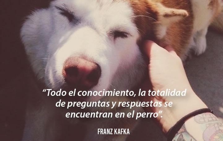 Frases emotivas sobre perros - Franz Kafka