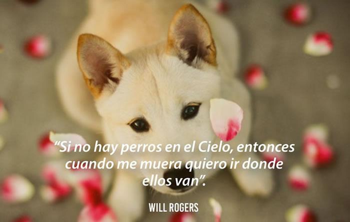 Poemas bonitos sobre perros - Will Rogers