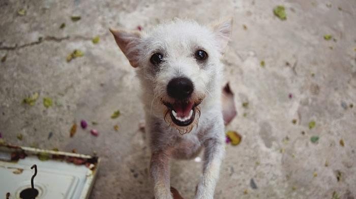 Nuestros perros, grandes aliados para nuestra salud física y mental