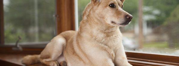 Precaución con la estafa en la búsqueda los perros perdidos en Canarias