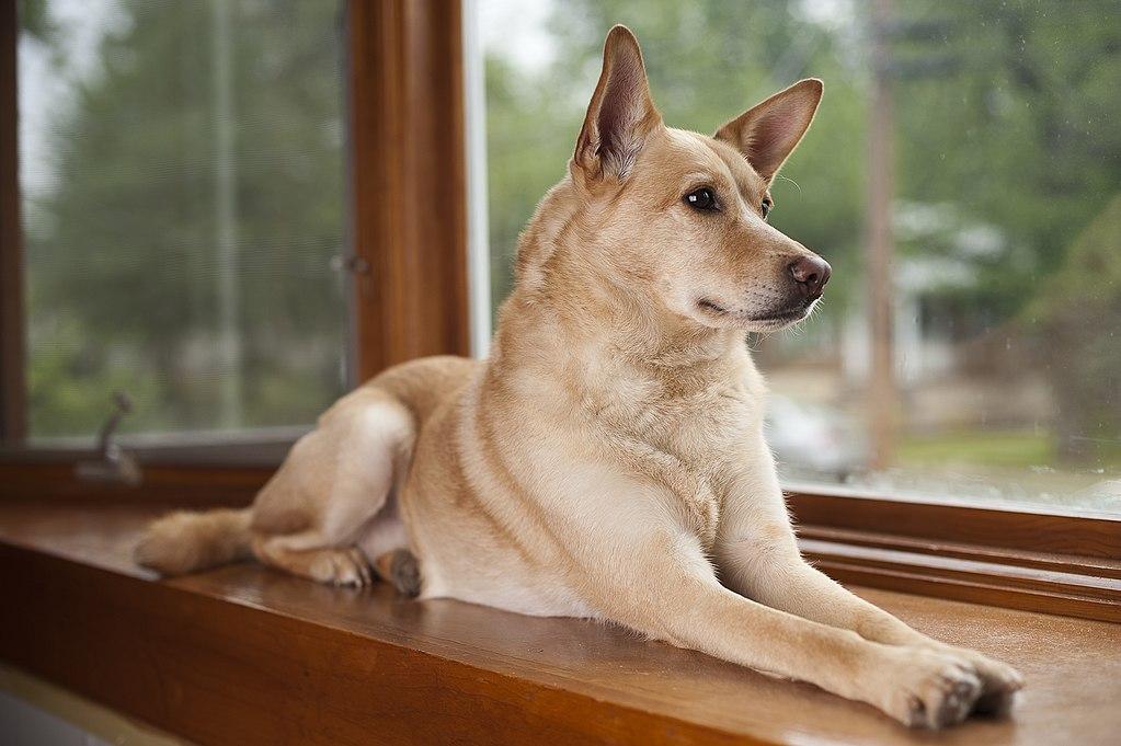 ¡Cuidado con la estafa de los perros perdidos de Canarias!