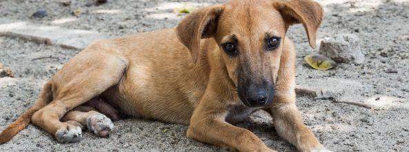 En Marbella será obligatorio limpiar la orina de los perros